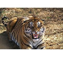 Tiger not very happy with us intruding  -  India Photographic Print