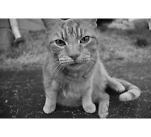 El Gato 2 Photographic Print