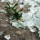 Broken Glass, Broken Flower by pange