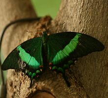A Blink of Emerald by pange