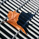 Grate Leaf by Michael  Herrfurth