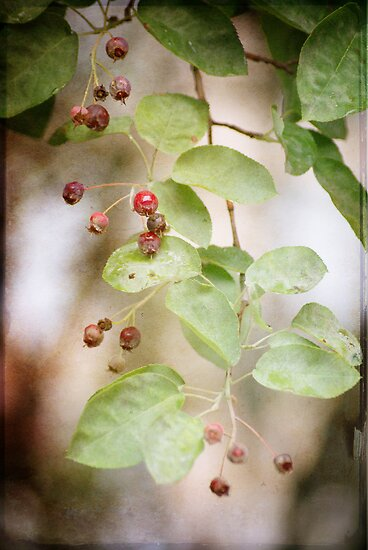 Vintage Berries by ©Maria Medeiros
