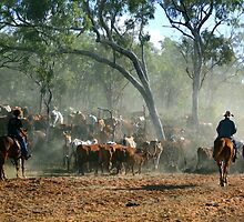 mustering in the Kimberley by robinmaher