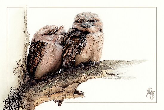 Tawny frogmouth card (Podargus strigoides) by Laura Grogan