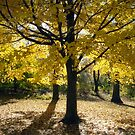 Central Park Autumn, New York by Alberto  DeJesus