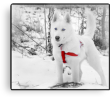I don't care if someone is stuck again, I'm still not Lassie. Metal Print