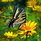 Swallowtail Dance by Diane E. Berry