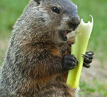 """""""I don't care what they told you. This is NOT a carrot."""" by ©  Paul W. Faust"""