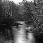 River Dart from Staverton Bridge by moor2sea