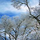 Frozen Trees (Ice Fog) by rocamiadesign