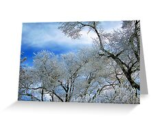 Frozen Trees (Ice Fog) Greeting Card