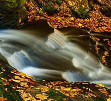 Rickette's Glen stream - #2794 by ©  Paul W. Faust
