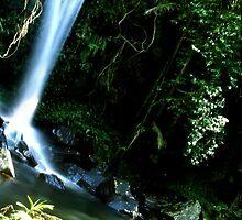 Curtis Falls Mt Tamborine by Nicole Roberts