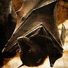 Flying Fox by G. Patrick Colvin