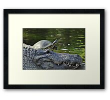 Alligator and Turtle, As Is Framed Print
