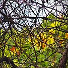 Canadian Autumn Through The Branches by heatherfriedman