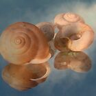 Reflections Of Snail Shells by Path-Finder