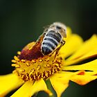 Bee and Flower by RosiLorz