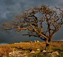 Passing Storm by AndyCosway