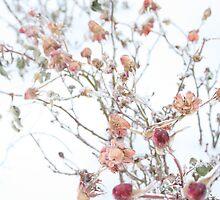 Frozen Rose Bush by Anna Reinalda