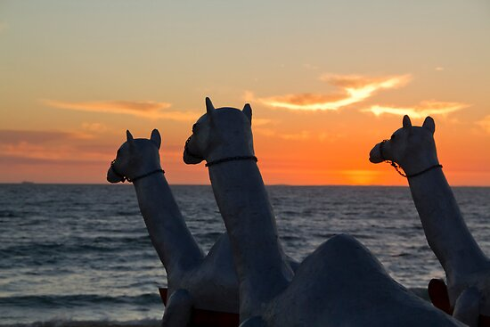 "Camels - Cottesloe ""Sculpture by the Sea"" by Sandra Chung"