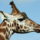 Giraffe by Mark Hughes