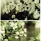 Spring - Cherryblossom Green by Sybille Sterk