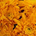 Yellow Mellow Mums by Marijane  Moyer