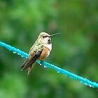 Bird On A Wire by Jann Ashworth