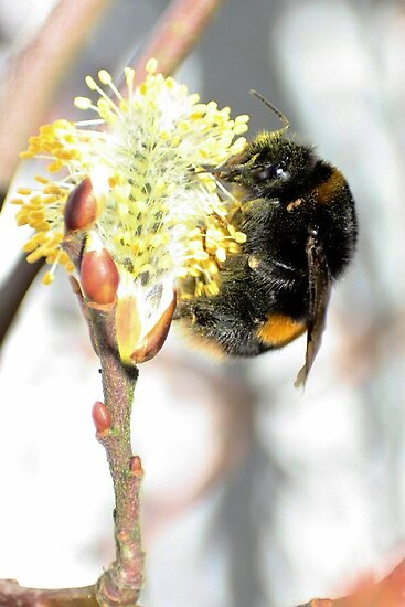 Willow Pollinator by missmoneypenny