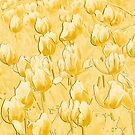 Yellow Tulips II line art by PhotosByHealy
