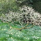 Dartington Garden Tree by Janice Petitjean