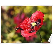 Bee and Poppy Poster
