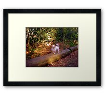 a dog with a mission Framed Print
