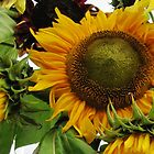 Savvy Sunflowers by Janice Petitjean