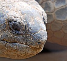 Giant Tortoise-----OR...... E.T. by Robert Taylor