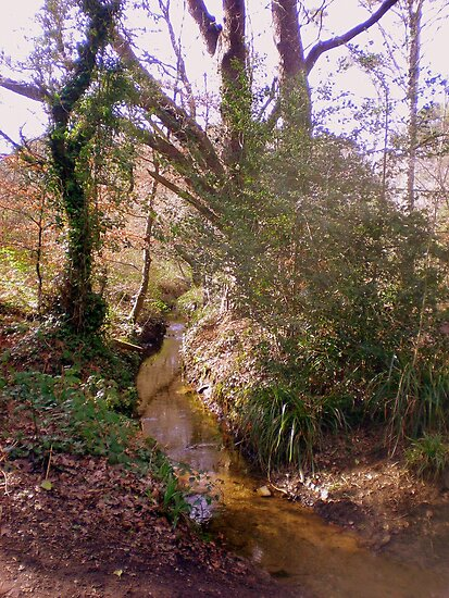 Upton Wood Stream by Songwriter
