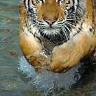 Lunge by James  Birkbeck Animals
