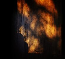 ShadowPicture by RosiLorz