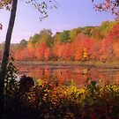 New England Autumn Foliage by Alberto  DeJesus