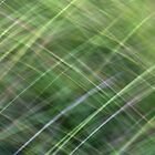 Impressionist Wild Grass by Kitsmumma