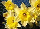 Spring Daffodil Flower Garden art prints Baslee Troutman by BasleeArtPrints