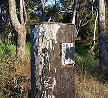 Tree Trunk Mailbox by lib225