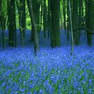 Bluebell, wood. by Anthony Thomas