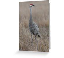 Florida Sandhill Crane Greeting Card