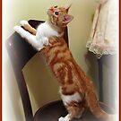 Tinkerbell Kitty by AngieBanta