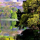 Scotland - Loch and Trees. by Jean-Luc Rollier
