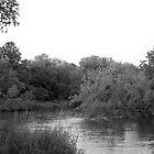Upstream by Anthony Roma