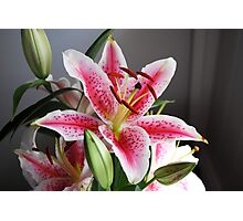 Flower Stargazer Lily Photographic Print