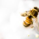 bee in high kee ... by caradione